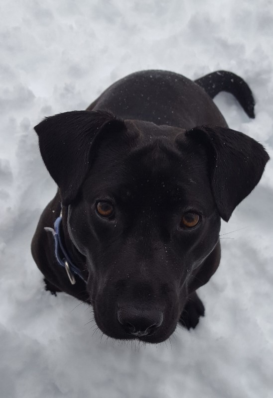 TOP 10 WINTER WEATHER TIPS FOR PETS